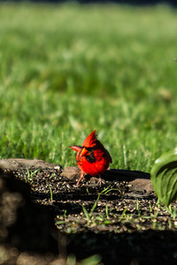 Birding_Rochester_061312_055
