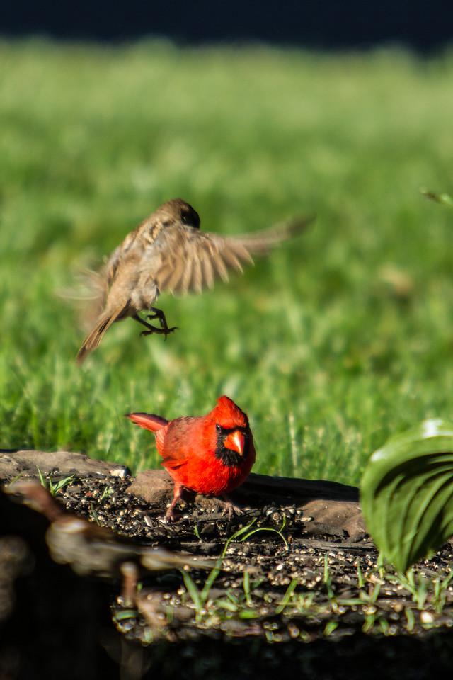 Birding_Rochester_061312_038