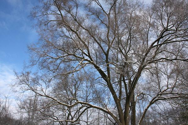 Wildwood Winter 2011