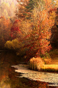 """Autumn At Willow Lake""  Fall colors on a small lake in western North Carolina."
