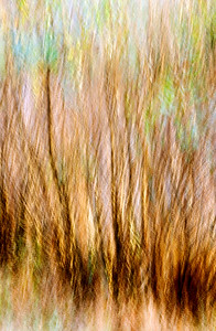 An abstract image of fall bushes near the lake.