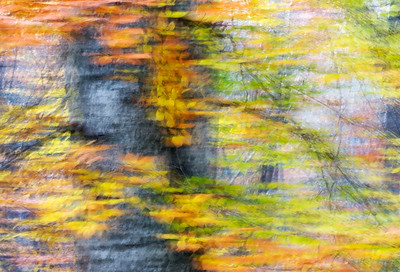 An abstract image of colorful leaves on a Birch tree.