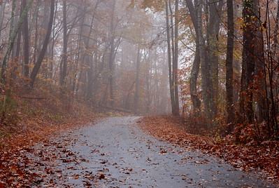 The road to the lake on a foggy morning.