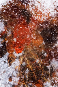 Fallen autumn leaves under a layer of ice.