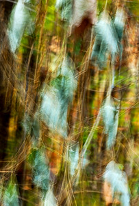 An abstract image of Kudzu vines, of which there is an abundance near the lake!