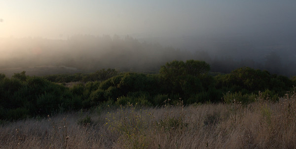 Fog rolling near sunset time