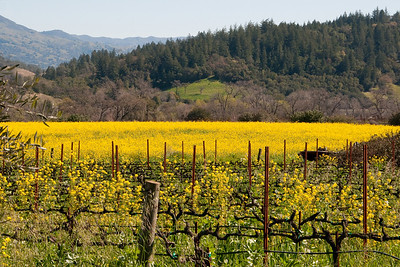 Wine Country Scenes