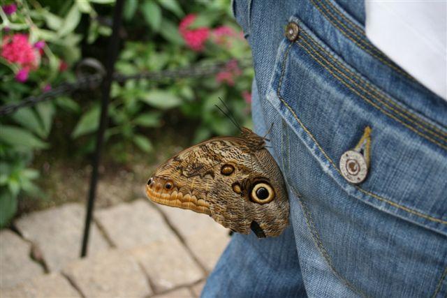Photo by Misty.  A butterfly lands on my butt. :o