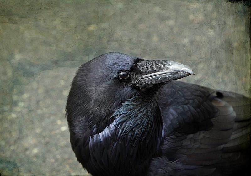 Raven Beauty