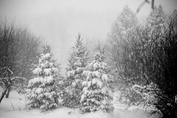 Winter 2011