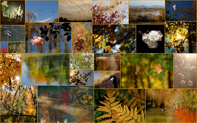 October 2012 Nature Collage