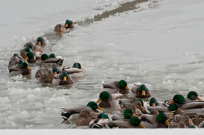 2008 Winter-1391