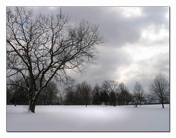 Winter in the Park ltbrgtIMG_0484w (40335609)