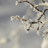 Snowflake frosted branches on wintry morning