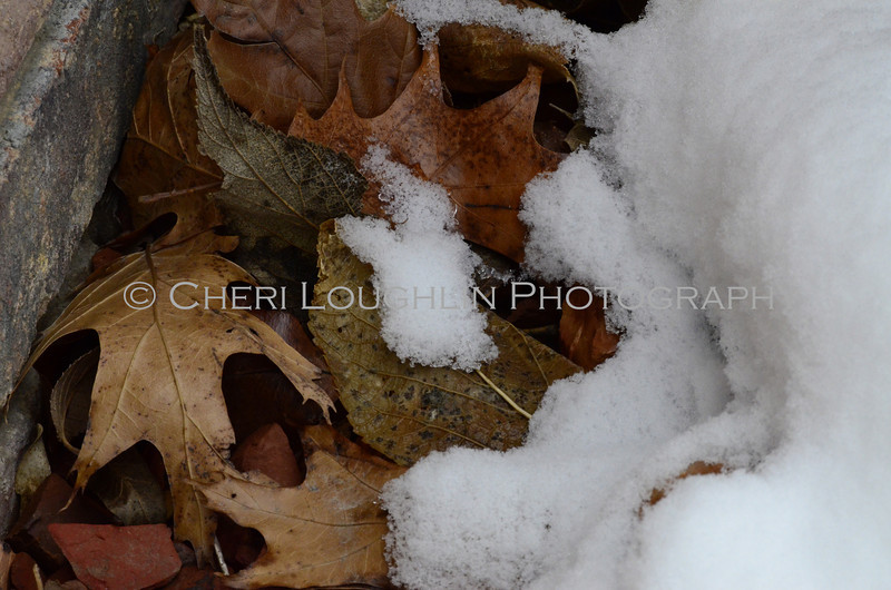 Fall leaves with snowy cover in winter