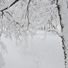 Path of the deer in winter under snowy trees