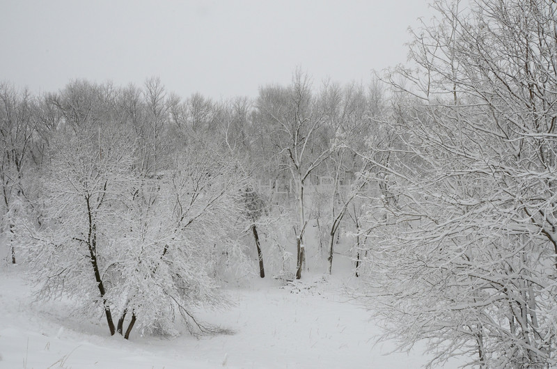 Valley of snowy trees