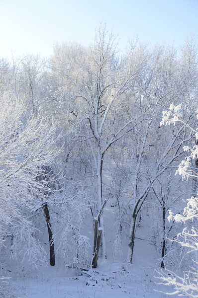 Snow covered trees in the valley