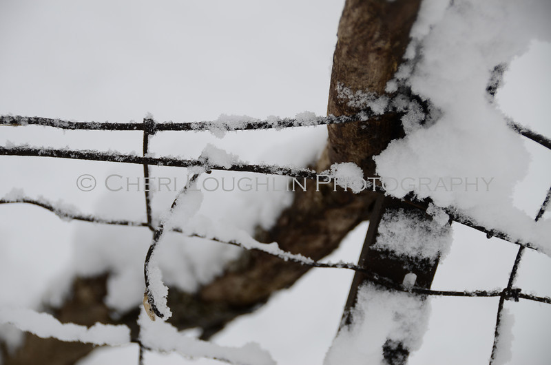 Barbed wire buried under the snow