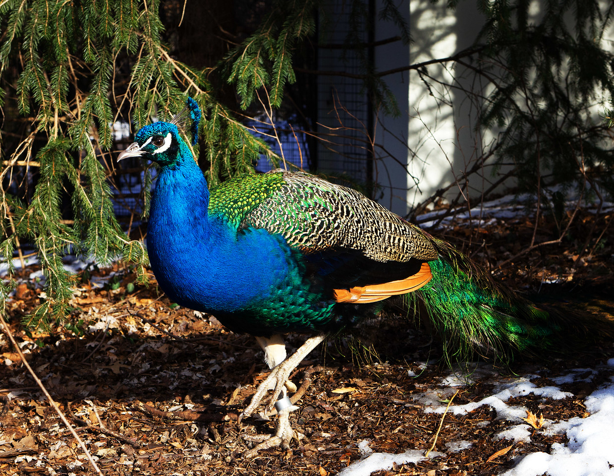 Wintertime at the Jewel Box, Forest Park, and the St. Louis Zoo.