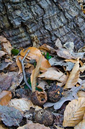 Normonstone Park DC