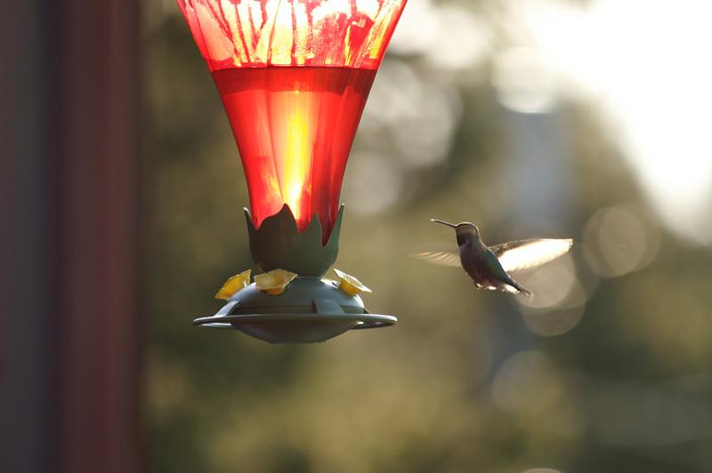 May 3, 2007 <br /> Enjoying the nectar