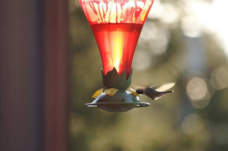 May 3, 2007 Hummingbirds!