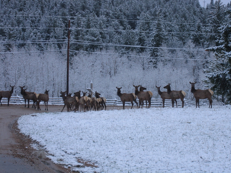 May 7, 2007<br /> And the elk stood there staring at us wondering what to do.