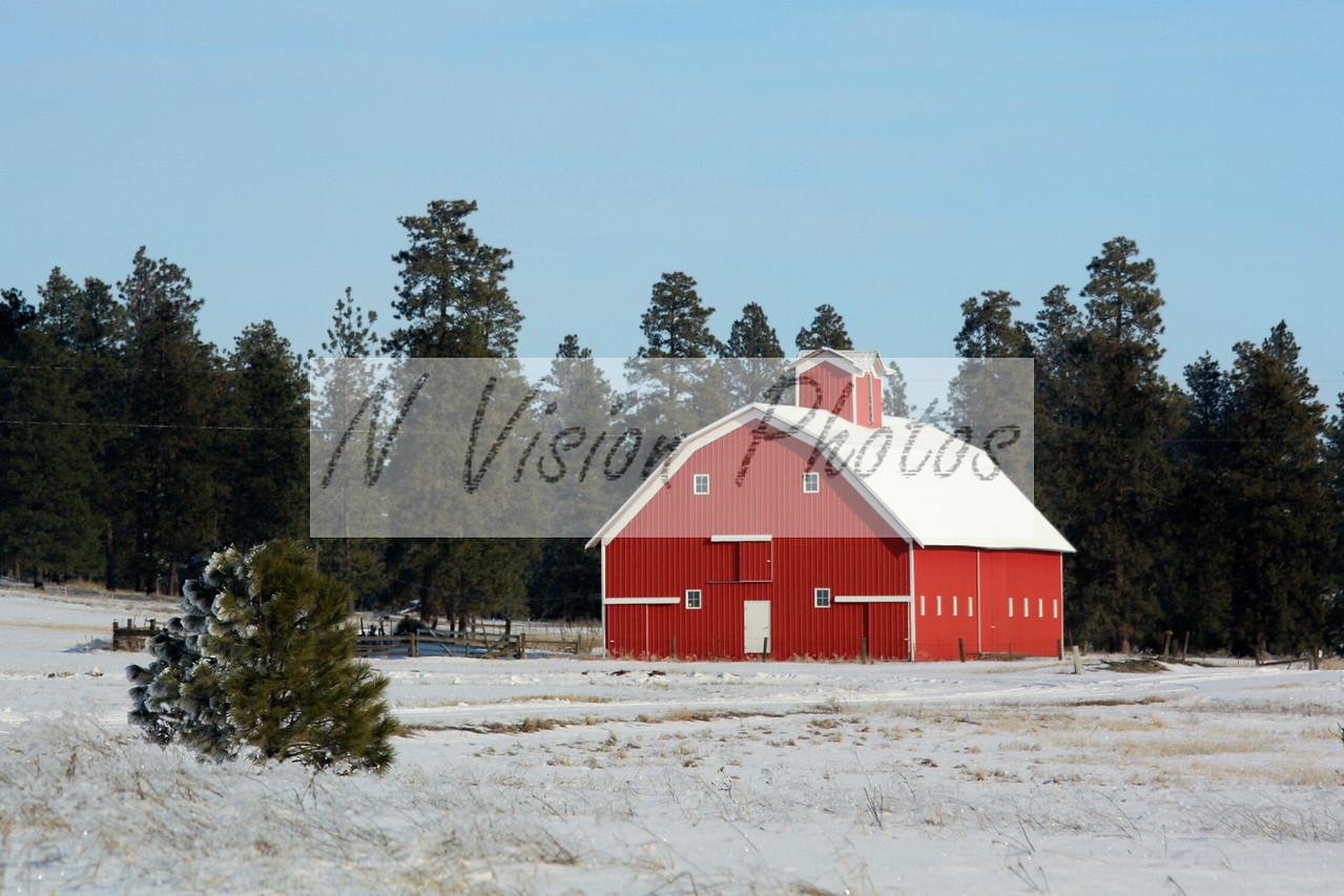 This picturesque red barn is located near Fairfield, Washington. The red contrast sets out from the snow lined trees on a bright sunny afternoon.