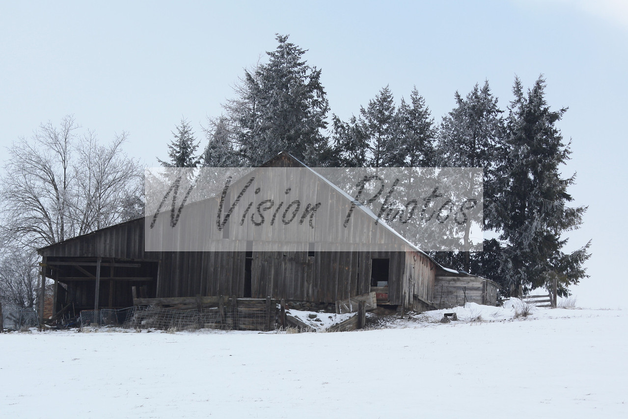 This is a true black and white meaning that it has not been altered in any way, has very little color to it.  I love when I find pictures like this old barn in winter and it's overcasted.