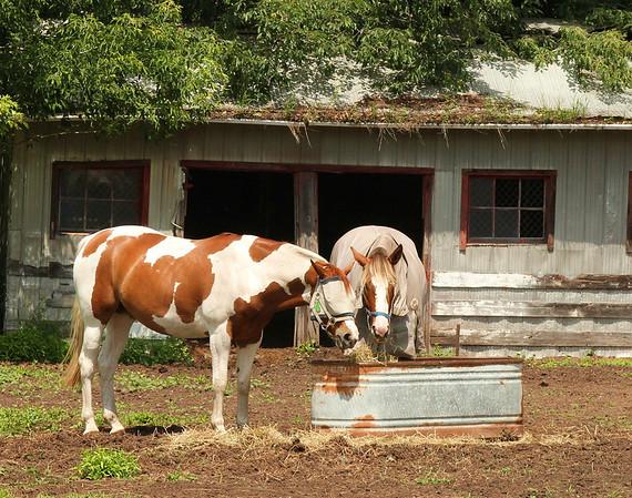 spiritless horses