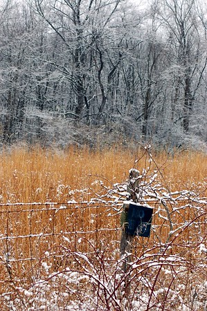 Yellowish brown weeds and grasses in front of a lightly dusted snowy woods.