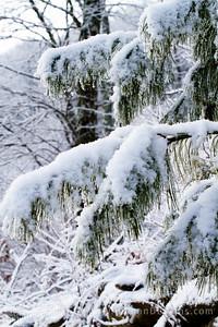 Snow tree in the Nantahala Forest.