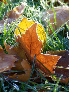 fall, frozen