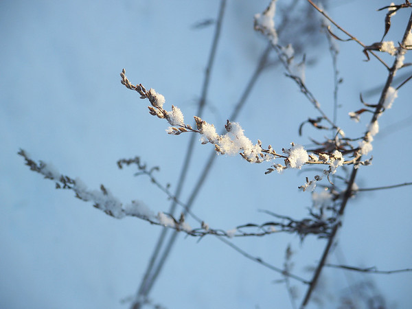 wisp of winter