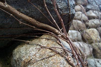 vine on stone