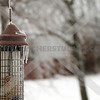 ice on the feeder