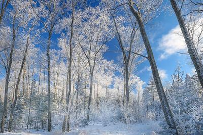 Icy Blue Skies