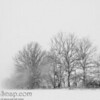 Trees in a snow storm<br /> <br /> This is a bit of calm and serenity in the middle of the storm.