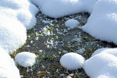 Gefrorene Pfütze / Frozen puddle