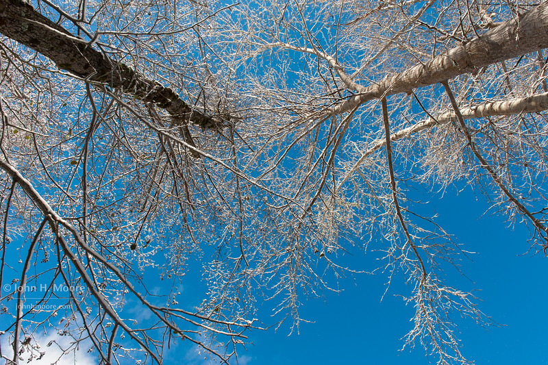 Ava's spot.  Looking up through a pair of trees along the Merced River in Yosemite National Park.