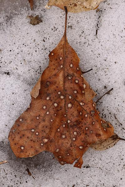 Winter Rust