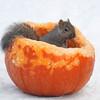 Me and My Pumpkin