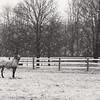 Snow Appy