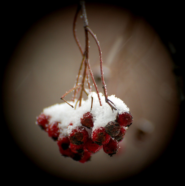 Berries out the window, February.