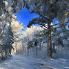A Northwoods Frozen Wonderland 7