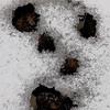 Deer Poop Graffiti