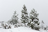 Snowy trees on a hilltop in Yosemite National Park.