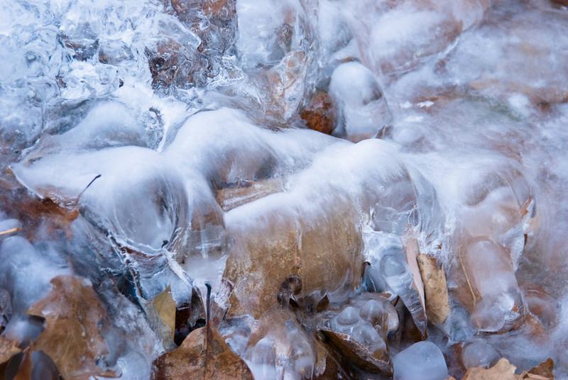 Frozen leaves in a stream near Brent's Gap, Horseshoe Mountain, Nelson County, Virginia