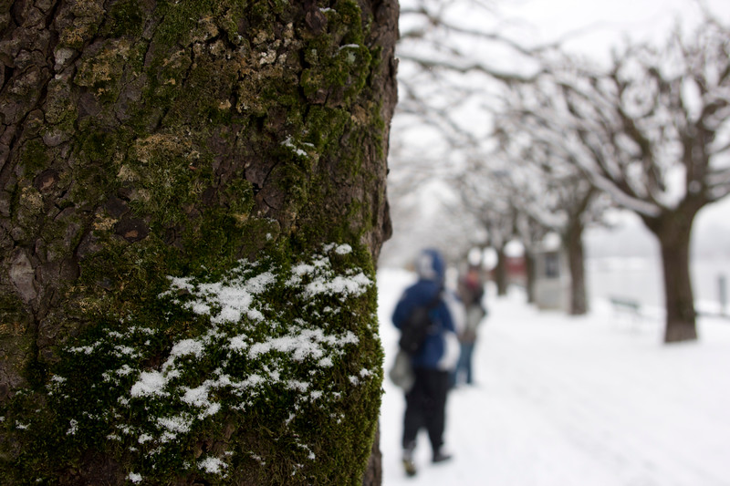 Switzerland, Lucerne, Green Amongst the Winter Wonderland SNM